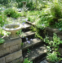 birdbaths: backyard entry
