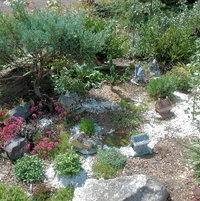 Fairy Garden with miniature conifers.