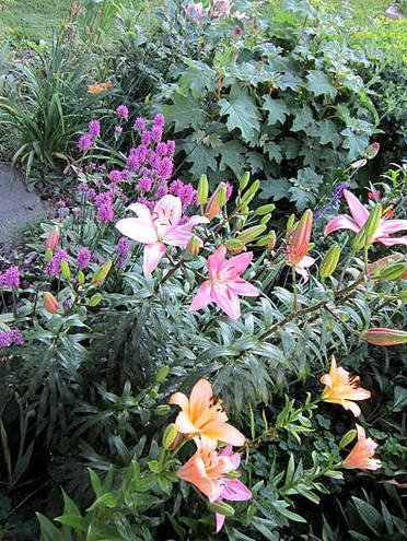 Renoire lilies with stacys hummelo