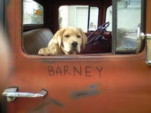 Barney in my 56 going for ice cream