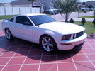 Garage - Dominant White Stallion