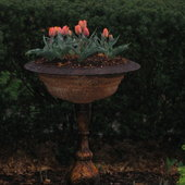 Victorian urn with 'Princess Irene' tulips