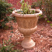 Fountain grass with English Ivy