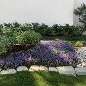 Ajuga and hostas- shade garden