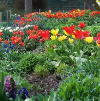 Spring bulbColour.