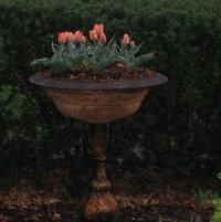 Victorian urn with 'Princess Irene' tulips