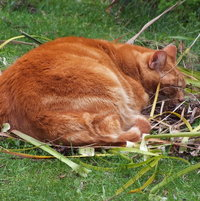 Clyde has found a weed nest...