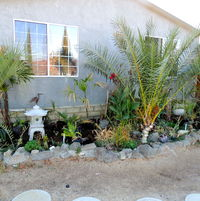 front palm garden just getting settled