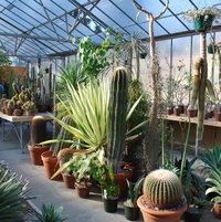 Huntington succulent greenhouse shot