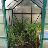 Grandio Element Greenhouse interior. I decided it was best for my situation with the 6x8 greenhouse to grow directly into my already perfect dirt. I wanted to extend my season for my peppers and tomatoes. I was also able to start my lettuce and swiss chard in early February of 2016 with great success.