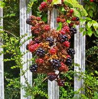 Bus Stop Berries Cork Ire