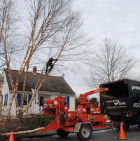 Preservation Tree Company pruning some other smaller branches also in Jan 2014