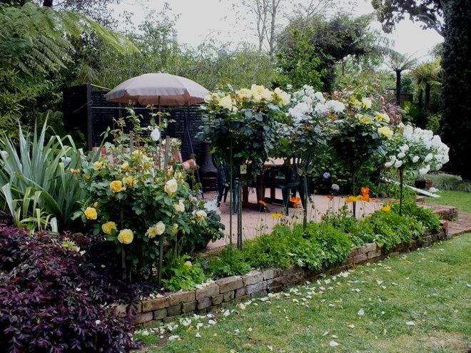 Standard Roses...